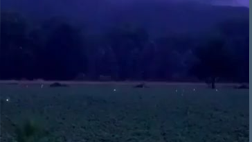 Field at night covered with fireflies.