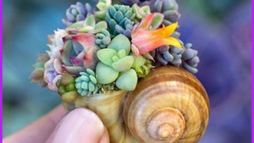 Mini succulents attached to a snail shell