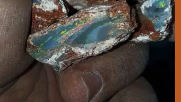 A miner showing his opals fresh from the ground.