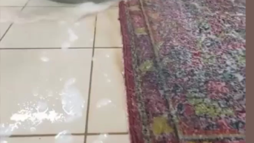 Carpet cleaning is so satisfying to watch