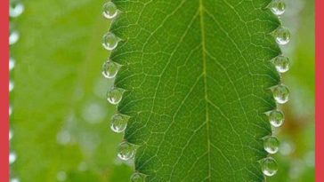 The way these water droplets rest on this leaf.